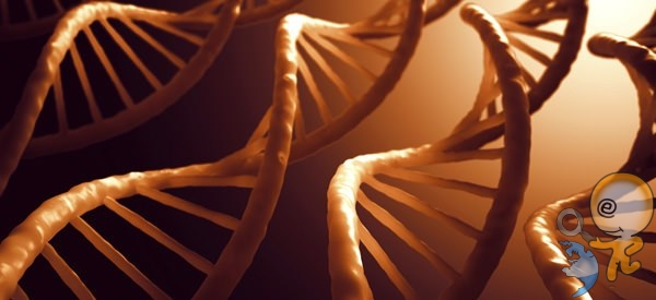 DNA-RNA Etkileşimi Saptayan Araç