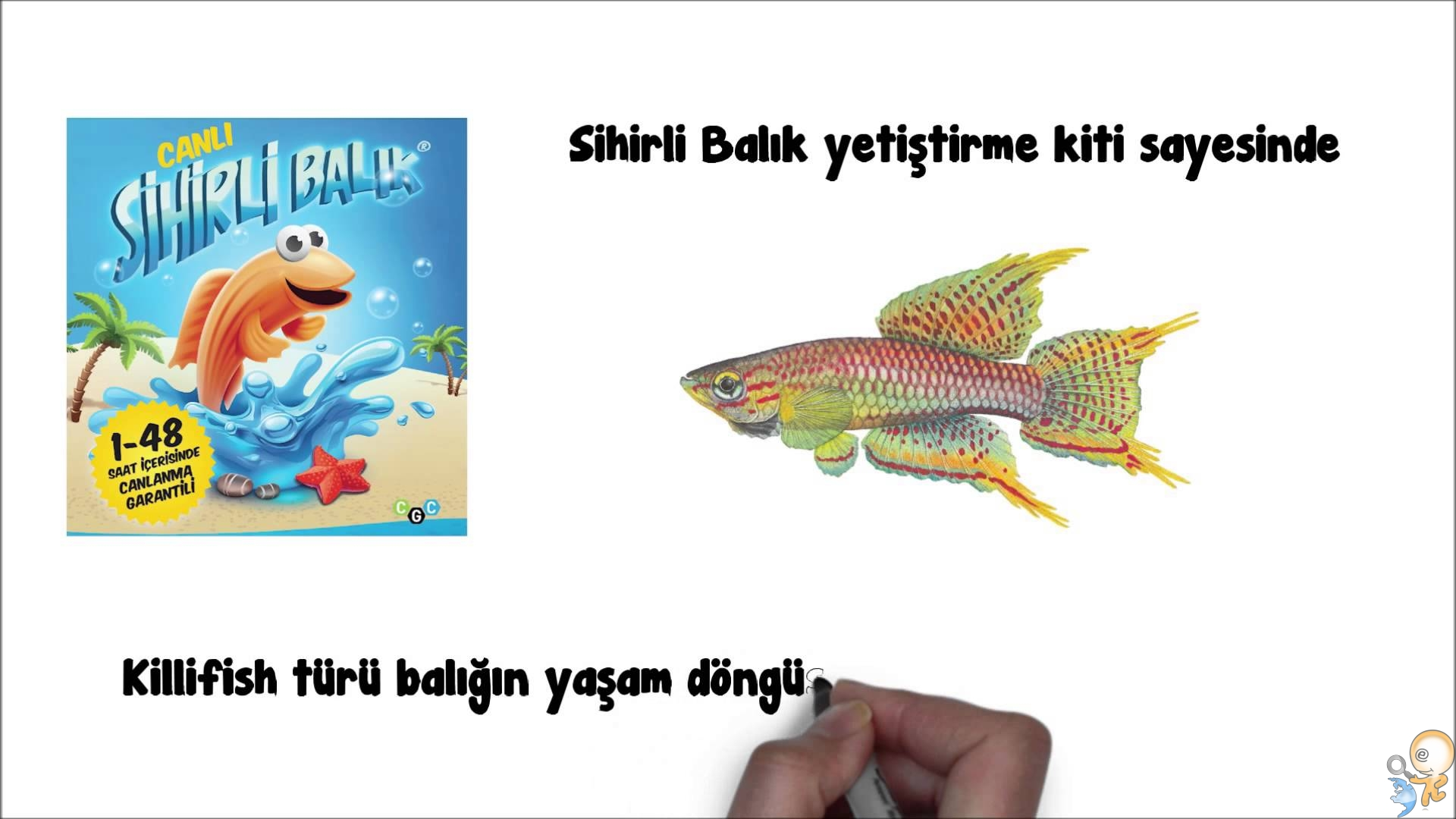 Photo of Suda Canlanan Balık KilliFish