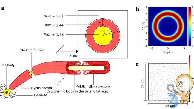 biyofotonlar üzerinden optik beyin