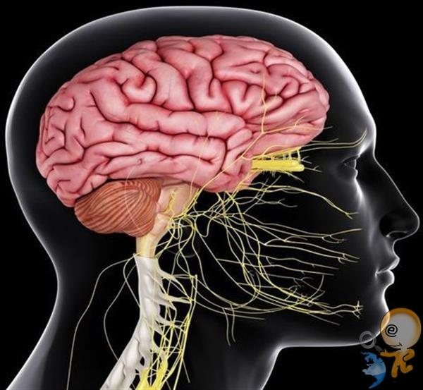 Photo of Biyofotonlar Üzerinden Beynimiz İletişimi ve Optik İletişim