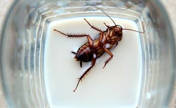 geleceğin süper içecegi hamam böceği sütü